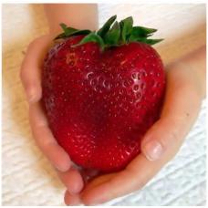 JCSSUPER 100 Pcs Giant Red Strawberry Seeds Heirloom Super Japan Strawberry Garden Seeds