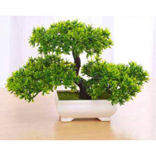 20 pieces Acacia plant bonsai Acacia flowers called mimosa silk tree for flower potted ornamental plants
