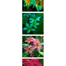 JCSSUPER 100Pcs Pack Plumeria Seeds Hawaiian Frangipani Flower Garden Wedding Party Decorations