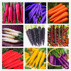 JCSSUPER 100 Pcs Pack Colorful Carrot Seeds Red White Purple Organic Healthy Vegetable Plant Seed